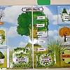 Изучаем деревья. Детский сад №1
