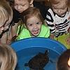 Наблюдение за живым объектом- черепахой. Детский сад №1