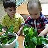 «Растут цветочки, у нас в садочке» Детский сад №44