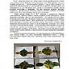 Аппликации из осенних листьев. Детский сад №14